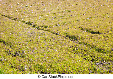 field of early spring