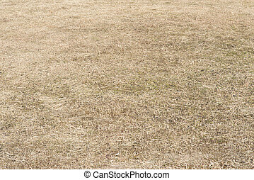 This is the field where grass is dead in winter.