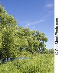 scenery of a riverside in spring