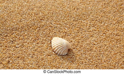 shell on the sandy beach, which washes off a wave