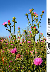 thistle bush with flowers under sky