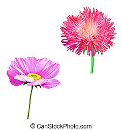 Thistle flowers, Pink Daisy, Poppy flower Illustration isolated on white