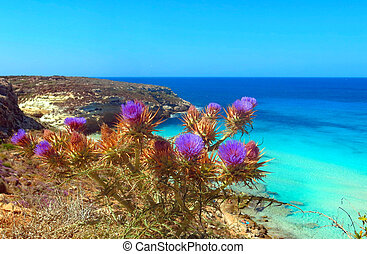 Thistle flowers with tblue sea of the island of the ...