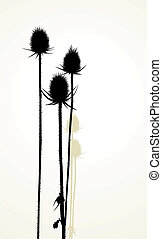 Thistle - Illustration silhouette of thistle