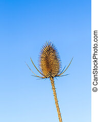 thistle in a field under blue sky