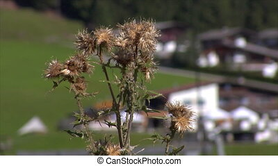 thistle in front of blurred ropeway