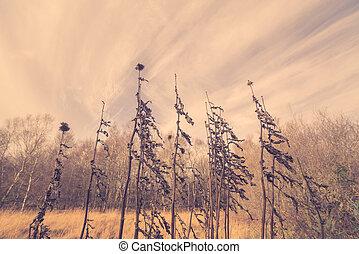 Thistles in autumn nature