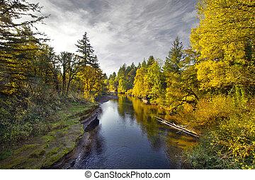 thomas, ruisseau, orégon, couleurs, automne, long