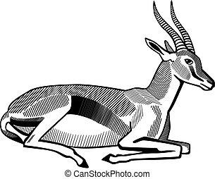 Thomson Gazelle - Vector illustration of a Thompson's...