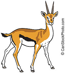 thomson gazelle - thomson gazelle,side view picture isolated...