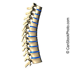 Thoracic Spine - Side view - Thoracic Spine - Lateral view -...