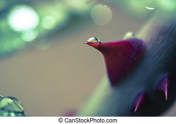 rose thorn with drop macro vintage
