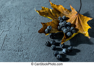 thorny blue berries on a dark autumn background