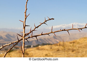 Three branches of thorny plant with mountains on the background