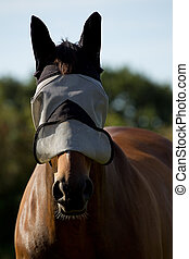 Thoroughbred Horse in a Fly Mask