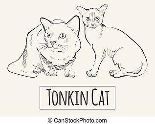 Thoroughbred Tonkin at sketch ,vector illustration animal
