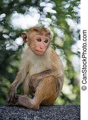 Thoughtful young monkey