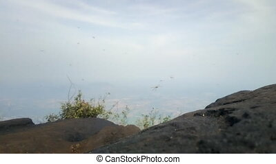 Thousands Dragonflies hover on top of sacred mountain Tiruvannamalai (Tamilnad, India), where during holidays and to monastery rises thousands of Indian pilgrims