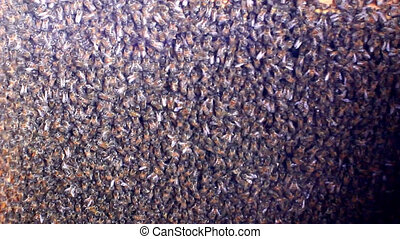Inside of a hive with a lot of bees - thousands of bees...