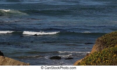 Elephant Seal Vista Point in San Simeon, California, a...