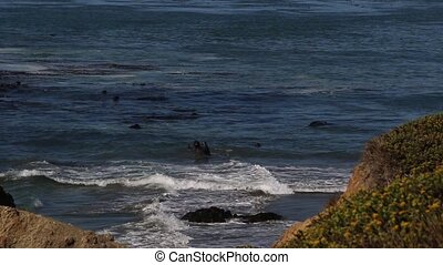 Elephant Seal Vista Point in San Simeon, California, a...