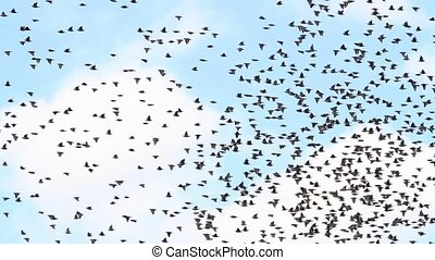 thousandth of a flock of starlings flies from tree