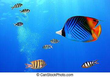 threadfin, butterflyfish