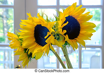 three 3 sun flowers in a vase on a table indoor