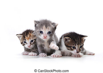 Adorable Newborn Kittens on a White Background