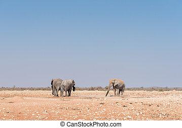 Three african elephants at a waterhole