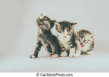 Three amazing kittens. Group of three little kittens on studio background