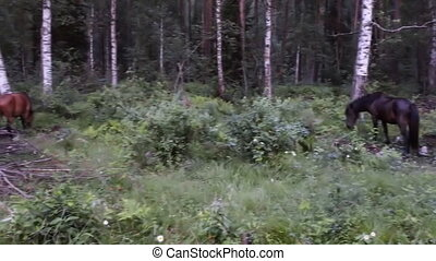 three animals horses group in green forest