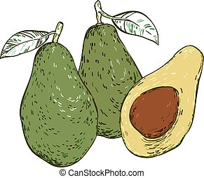 Three avocados colored  hand-drawn sketch