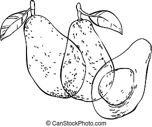 Three avocados hand drawn doodles isolated