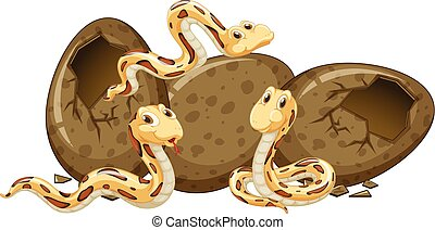 Three baby snakes and eggs