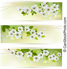 Three banners with blossoming tree branches. Vector ...