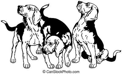 three beagle hounds black white - three beagle...