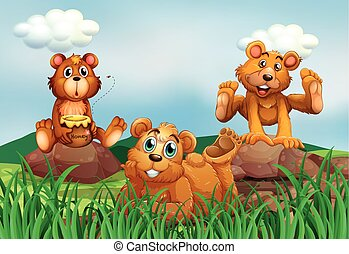Three bears in the field