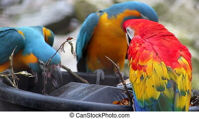 Blue and Yellow Macaw and Scarlet M - Three Beautiful...