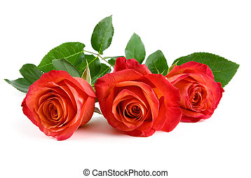 Three beautiful red roses on white