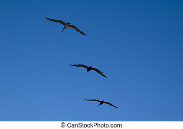 Three Birds Flying