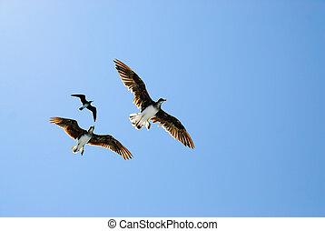 Three birds in blue sky