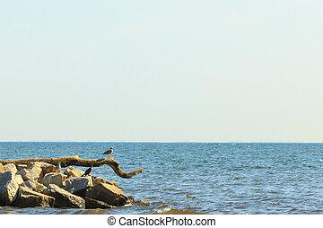 Three birds on branch on sea.