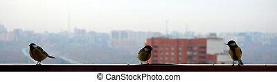 Three birds on cityscape background