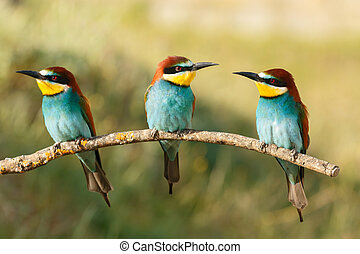 Three birds perched on a branch