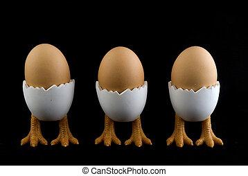 three birds with eggs