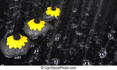 Three black stones with flowers in the rain, drops, bubbles, wind