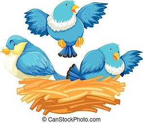 Three blue birds in the nest