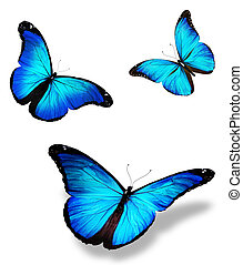 "Three blue butterfly ""morpho"", isolated on white background"