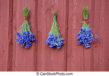 three blue cornflower bunch on red house wall